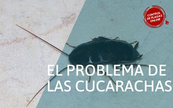 El problema de las Cucarachas