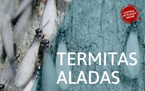 Diferencias entre las termitas aladas y las hormigas