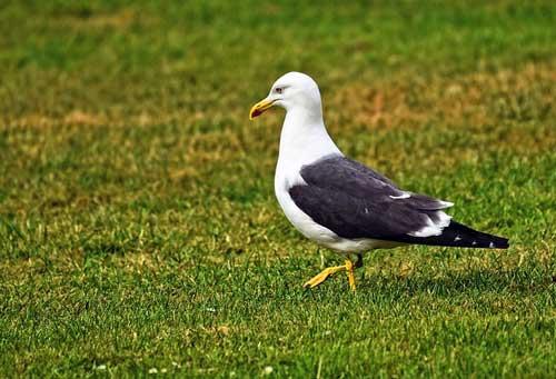 como eliminar las aves urbanas o palomas