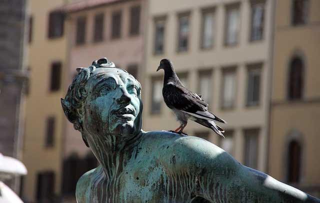 como eliminar las palomas