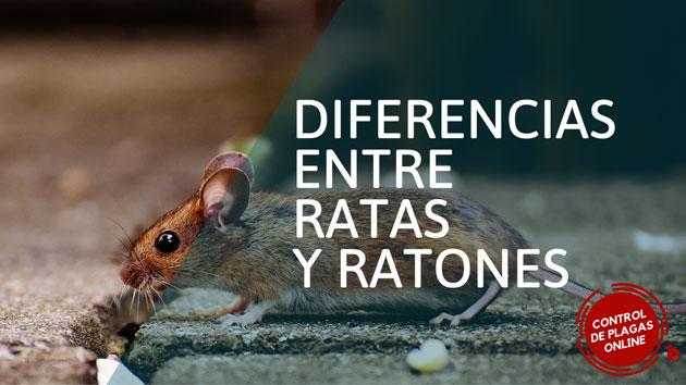 Diferencia entre rata y ratón