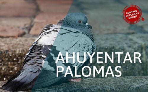 Ahuyentar las palomas de mi tejado