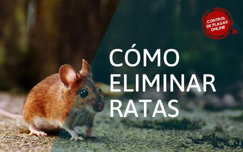 ¿Cómo eliminar ratas?