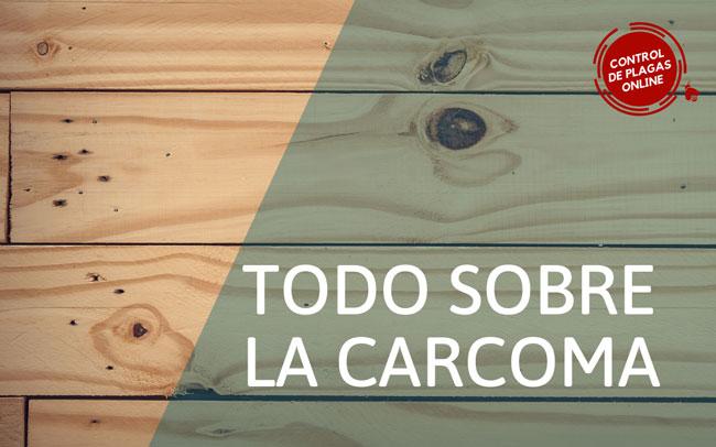 La carcoma de los muebles (Anobium Puntactum)