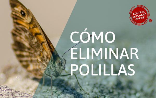 ¿Cómo eliminar polillas?
